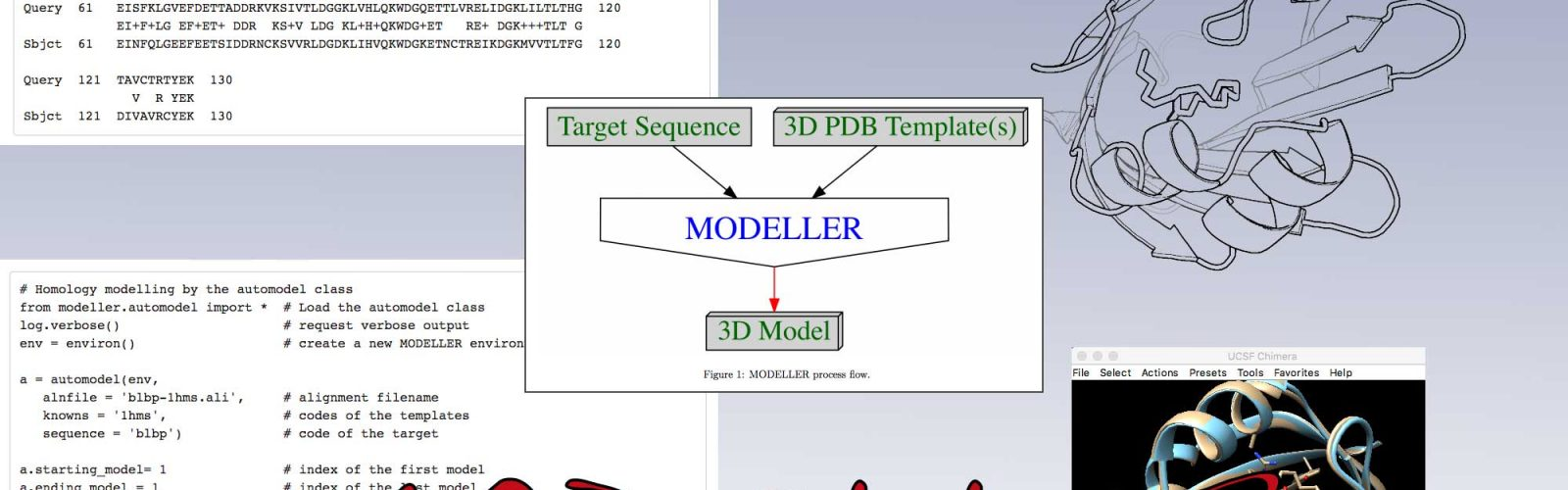 Homology modeling process.