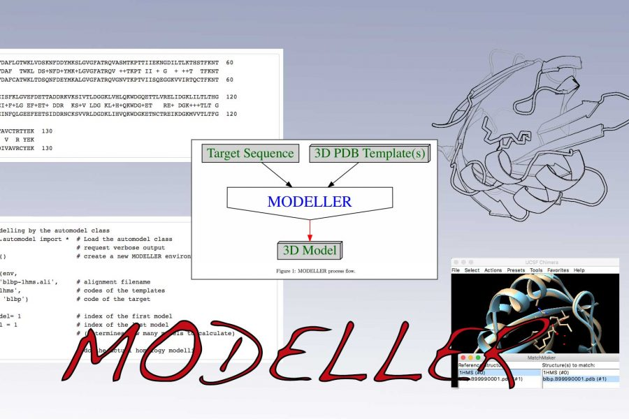 Homology modeling process.